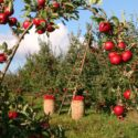 Farmers welcome extension to Seasonal Workers Pilot in 2021